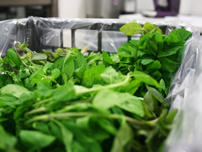 Mint Fresh Product Packaging